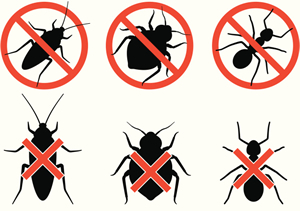Image result for Bed Bug Exterminator NY