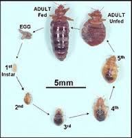 Joeblue Pest Control Pest Control Bed Bugs In Long Island